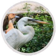 Flamingo Gardens - Great Egret Profile Round Beach Towel