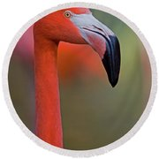 Flamingo Portrait - Sacramento Zoo Round Beach Towel