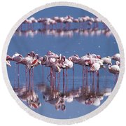 Flamingo Reflection - Lake Nakuru Round Beach Towel
