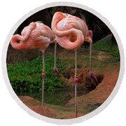 Flamingo See Flamingo Do Round Beach Towel