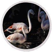 Flamingo Study - 2 Round Beach Towel