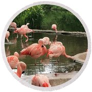 Flamingoes Looking Oh So Pretty  Round Beach Towel