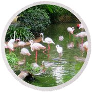 Flamingos 4 Round Beach Towel