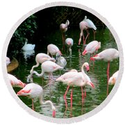 Flamingos 6 Round Beach Towel