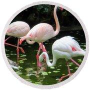 Flamingos 8 Round Beach Towel