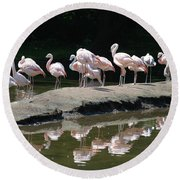 Flamingos With Reflection Round Beach Towel