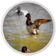 Flapping Lesser Scaup Round Beach Towel