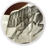Flea From Robert Hookes Micrographia Round Beach Towel