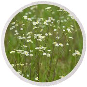 Fleabane In The Meadow Round Beach Towel