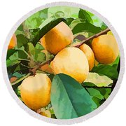 Fleshy Yellow Plums On The Branch Round Beach Towel