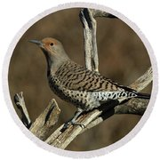 Flicker On Cedar Round Beach Towel