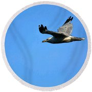 Flight Of A Ring Billed Round Beach Towel