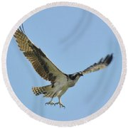 Flight Of The Osprey Round Beach Towel