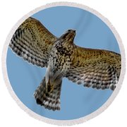 Flight Of The Red Shouldered Hawk Round Beach Towel