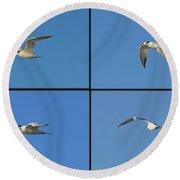 Flight Of The Tern Collage Round Beach Towel