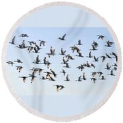 Flight Of The White Ibis Round Beach Towel