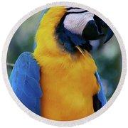 Flirtacious Macaw Round Beach Towel