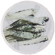 Flock Of Lures Round Beach Towel