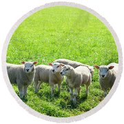 Flock Of Sheep Standing In A Field Waiting Round Beach Towel