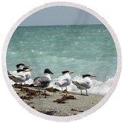 Flock Of Terns Gp Round Beach Towel