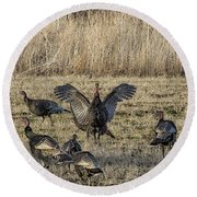Flock Of Wild Turkeys Round Beach Towel