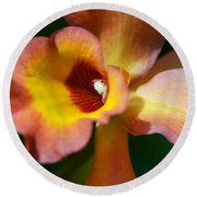 Floral Art - Intimate Orchid 3 - Sharon Cummings Round Beach Towel