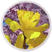 Floral Fine Art Daffodils Art Prints Spring Flowers Sunlit Baslee Troutman Round Beach Towel