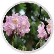Floral Garden Pink Rhododendron Flowers Baslee Troutman Round Beach Towel