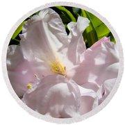 Floral Rhdodendron Flower Art Print Pink Sunlit Rhodies Baslee Round Beach Towel