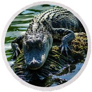 Florida Alligator Round Beach Towel