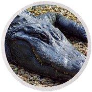 Florida Alligator Round Beach Towel
