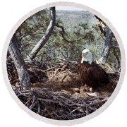 Florida: Bald Eagles, 1983 Round Beach Towel