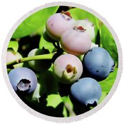 Florida - Blueberries - On The Bush Round Beach Towel