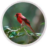 Florida Cardinal Round Beach Towel