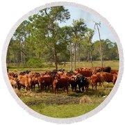 Florida Cracker Cows #1 Round Beach Towel