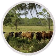 Florida Cracker Cows #3 Round Beach Towel