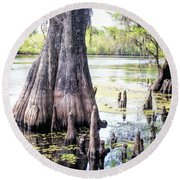 Florida Cypress, Hillsborough River, Fl Round Beach Towel