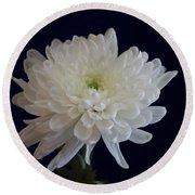 Florida Flowers - White Gerbera Ready For Full Bloom Round Beach Towel
