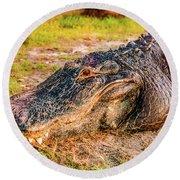 Florida Gator 1 Round Beach Towel