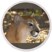 Florida Panther Round Beach Towel