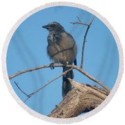 Florida Scrub Jay Watching The Lay Of The Scrub Round Beach Towel