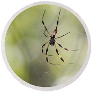 Florida Spider Round Beach Towel