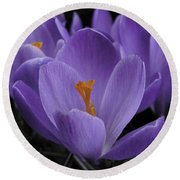Flower Crocus Round Beach Towel