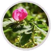 Flower Of Eglantine - 2 Round Beach Towel