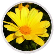 Flower Of Sunshine Round Beach Towel
