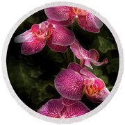 Flower - Orchid - Phalaenopsis - The Cluster Round Beach Towel