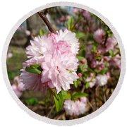 Flowering Almond Round Beach Towel