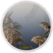 Flowering Cane Plant Round Beach Towel