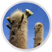 Flowering Echinopsis Atacamensis Cactus Bolivia Round Beach Towel