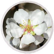 Flowering Fruit Tree Round Beach Towel
